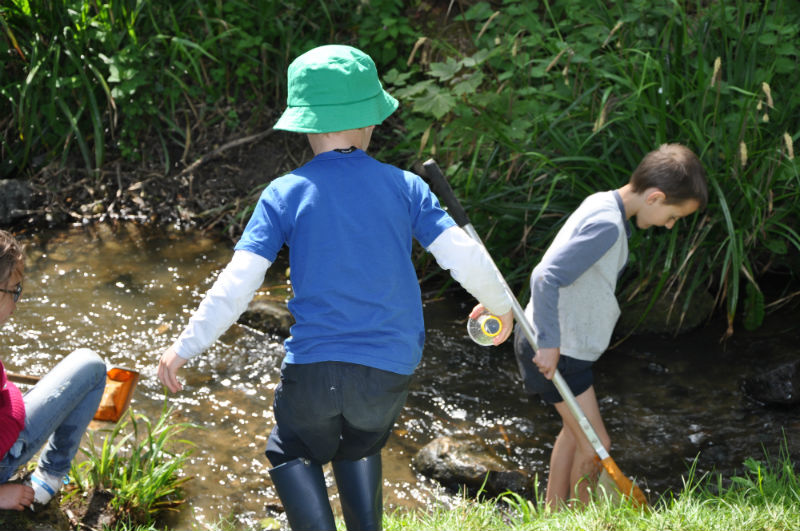 Primary-boys-stream-dipping